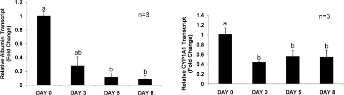Real-time quantitative PCR analysis of albumin and CYP1A1 gene expression in cultured hepatocytes. Panel A shows relative transcript level of albumin and, Panel B shows CYP1A1 relative transcript level expressed as fold change.