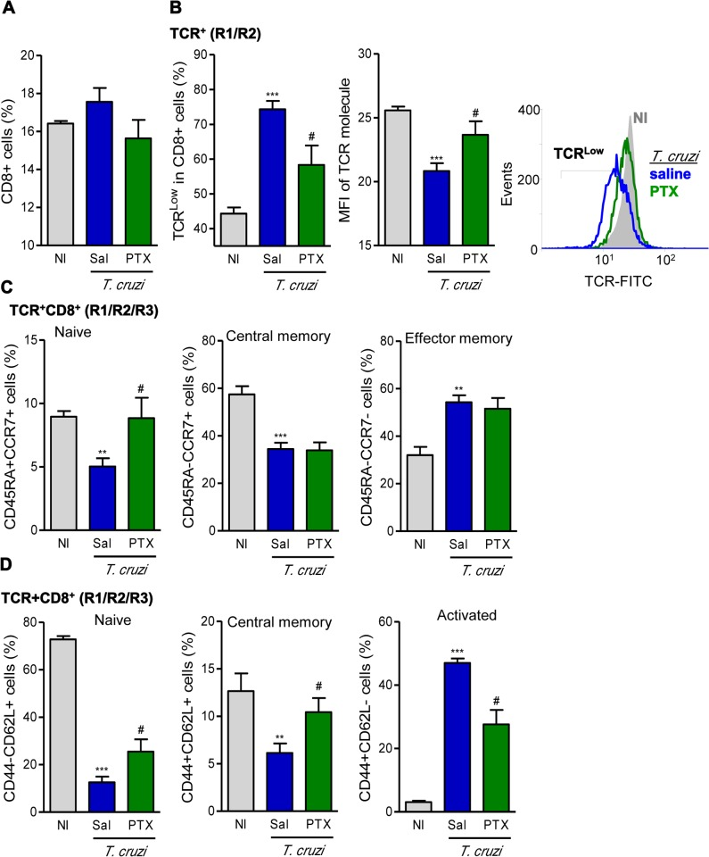 PTX therapy rescued TCR expression and influenced naïve/memory/activation phenotypes of CD8 + T-cells. (A) Flow cytometry analysis of CD8 + T-cells in the spleen. (B) Frequency of TCRαβ Low cells and mean fluorescence intensity (MFI) of TCR in CD8 + T-cells. (C) Frequencies of splenic TCR + CD8 + cells expressing CD45RA + CCR7 + (naïve), CD45RA - CCR7 + (central memory) and CD45RA - CCR7 - (effector memory). (D) Frequencies of CD44 - CD62L + (naïve), CD44 + CD62L + (central memory) and CD44 + CD62L - (activated) CD8 + T-cells. The results represent three to five mice per experimental group in three independent experiments. ** p