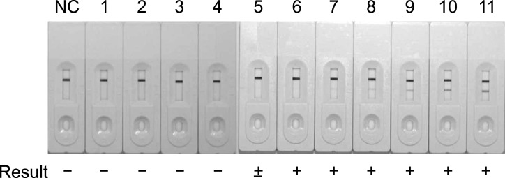 Detection limit of the SD MPT64 Rapid test for Mycobacterium (M.) bovis . The test was used to analyze a series of diluted suspensions of M. bovis AN5 cultured in Middlebrook 7H9 broth with enrichment. A representative image of three tests is shown. The results were interpreted as positive (+), negative (-), or weak (±). NC, negative control; 1, 2.1 × 10 3 CFU/mL of M. bovis ; 2, 4.2 × 10 3 CFU/mL of M. bovis ; 3, 8.5 × 10 3 CFU/mL of M. bovis ; 4, 1.7 × 10 4 CFU/mL of M. bovis ; 5, 3.4 × 10 4 CFU/mL of M. bovis ; 6, 6.8 × 10 4 CFU/mL of M. bovis ; 7, 1.3 × 10 5 CFU/mL of M. bovis ; 8, 2.7 × 10 5 CFU/mL of M. bovis ; 9, 5.4 × 10 5 CFU/mL of M. bovis ; 10, 1.0 × 10 6 CFU/mL of M. bovis ; 11, 2.0 × 10 6 CFU/mL of M. bovis .