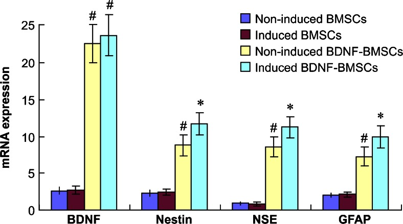 mRNA expression of BMSCs and BDNF-BMSCs. BDNF, nestin, NSE, and GFAP mRNA expression of BMSCs and BDNF-BMSCs determined by RT-PCR (mean ± SD). # P