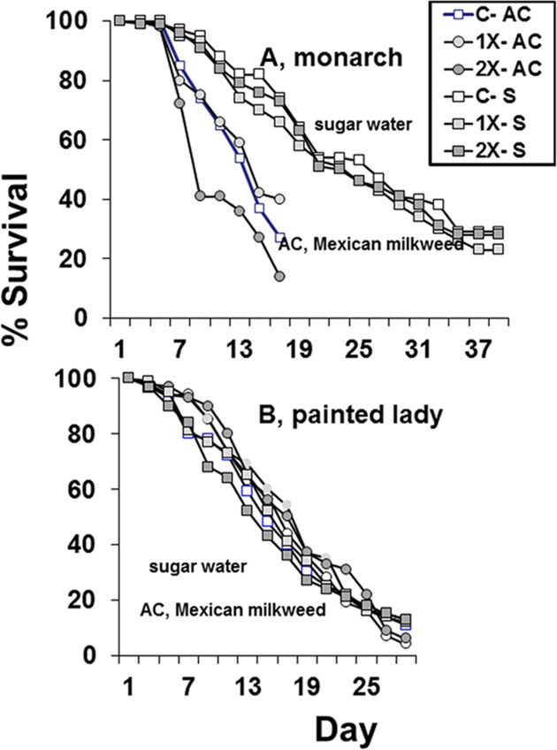Survival of two species of adult butterflies that were free-ranging and allowed to feed on flowers from Mexican milkweed, Asclepias curassavica (AC), that were untreated (C), treated with label rate (1X), or twice label rate (2X) of soil-applied imidacloprid (Marathon 1%G) or that were force-fed 30% syrup syrup (S) containing 0 ppb (C), 15 ppb (1X), or 30 ppb (2X) imidacloprid.