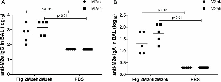 Anti-M2e antibody response in BAL. BALB/c mice (n = 5/group) were immunised i.n. with 50 μg of Flg-2M2eh2M2ek recombinant protein on days 0, 14, 28. Mice of control group were administered with PBS. Two weeks post-second boost M2e-specific <t>IgG</t> (A) and sIgA (B) responses were evaluated by ELISA to M2eh and M2ek synthetic peptides. Horizontal bars indicate mean titres among 5 mice per group. Statistical significance was determined using the Mann-Whitney U-test. The P values between immunised and control groups are indicated.