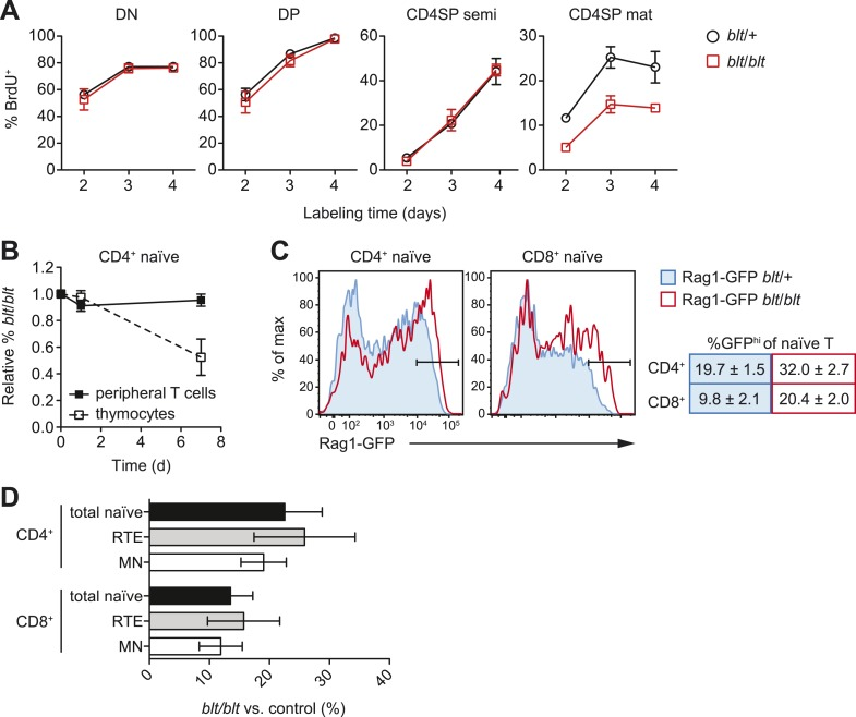 Impaired late-stage SP thymocyte development and early post-thymic peripheral T cell maturation in blt/blt mice. ( A ) Turnover of DN, DP, semi-mature, and mature CD4SP thymocytes assessed after 2–4 days of continuous in vivo BrdU labeling (mean ± s.d., n = 4). ( B ) Input-normalized fraction of donor CD45.2 + CD4 + CD62L hi CD44 lo naïve T cells (closed symbols) or CD4SP thymocytes (open symbols) that were blt/blt , recovered from spleen at indicated time points after transfer of blt/blt and control peripheral lymphocytes or thymocytes to lymphoreplete CD45.1 + hosts (mean ± s.d., n = 2–4). ( C ) (left) GFP signal in CD62L hi CD44 lo CD4 + and CD8 + T cells from spleen of Rag1-GFP transgenic blt /+ vs. blt / blt mice. (right) Percentage of GFP hi naïve T cells, gated as shown in histograms (mean ± s.d., n = 6–8). ( D ) Percentage of total naïve T cells, GFP hi RTEs and GFP lo mature naïve (MN) T cells from spleens of blt/blt mice relative to matched blt /+ littermate controls. Data obtained from mice analyzed between 7 to 10 weeks of age (mean ± s.d., n = 10). DOI: http://dx.doi.org/10.7554/eLife.03549.011