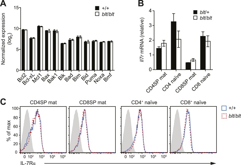 Normal expression of IL-7 receptor and Bcl2 family members. ( A ) Normalized expression levels of indicated Bcl2 family genes from Affymetrix array analysis of mRNA from sorted WT and blt / blt mature CD4SP thymocytes (mean ± s.d., n = 3). ( B ) Quantitative RT-PCR analysis of Il7r transcript in FACS-purified mature SP thymocytes and naïve T cells (mean ± s.d., n = 3). ( C ) Surface expression of IL-7Rα on WT (CD45.1 + CD45.2 + ) and blt / blt (CD45.2 + ) mature SP thymocytes and naïve T cells from mixed chimeras. Data are representative of eight mice. DOI: http://dx.doi.org/10.7554/eLife.03549.014