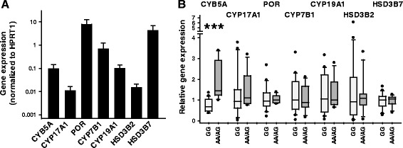 Effect of rs1790834 genotypes on expression of CYB5A and steroidogenic genes. Real-time quantitative PCR analysis of mRNA expression in 22 RA synovial fibroblast lines (rs1790834 genotype GG, n = 15; AA/AG genotypes, n = 7). (A) Synovial fibroblasts express all genes, which are necessary for synthesis of biologically active androgens. Mean ± SD of expression levels normalized to <t>HPRT1</t> of combined data for all genotypes. (B) rs1790834 genotype-dependent expression levels, which are normalized to the median value of the combined expression data for each gene. In the box-and-whisker plots the genotypes with the rare allele A were grouped together (AA, n = 1; AG, n = 6). The boxes represent the 25th to 75th percentiles, and horizontal lines within the box represent median values. The whiskers show the 10th and 90th percentiles, respectively, and dots represent individual values exceeding these limits. ***Significant rs1790834 genotype-dependent expression, P