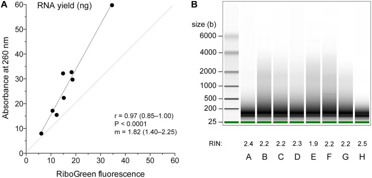Assessment of total RNA extracted from FFPE tissues. A. Correlation between measurements of RNA yield (μg) obtained using absorbance at 260 nm or fluorescence with RiboGreen dye (n = 8). The lines of identity and linear regression (least squares method) and values and 95% confidence intervals of the Pearson coefficient ( r ) and slope of linear regression ( m );  P -values are also noted. B. Electrophoretogram of the 8 RNA samples ( A - H ). Samples were run on an Agilent Eukaryote Total RNA Pico chip on Bioanalyzer 2100. Sizes of molecular weight markers and the RNA integrity numbers are noted.