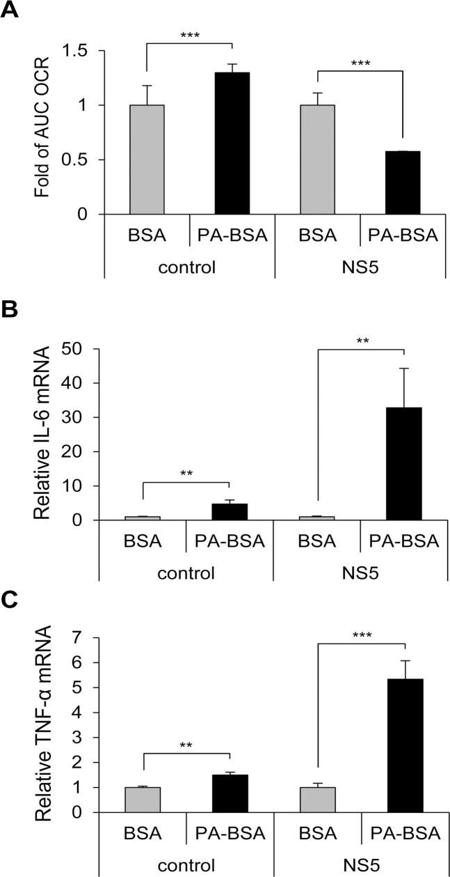 Impaired LCFA β-oxidation and cytokine induction in NS5-overexpressing cells. (A) AUC OCR for NS5-overexpressing and vector control-A549 cells incubated with serum-free medium for 1 h, then treated with PA-BSA or BSA control for 18 h (n = 2). (B and C) NS5-overexpressing and vector control-A549 cells were cultured with serum-free medium for 1 h, then incubated with PA-BSA or BSA for 24 h. RT-qPCR analysis of the relative mRNA levels of IL-6 (B) and TNF-α (C) (n = 3). Data are mean±SD. **P
