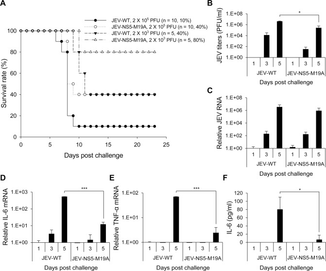 Reduced neuroinvasiveness of NS5-M19A—mutated JEV in challenged mice. (A) Survival in C57BL/6 mice infected with 10 3 or 10 5 PFU JEV-WT or JEV-NS5-M19A by an intraperitoneal (i.p.) plus i.c. route. The animal number ( n ) and survival rate for each group are shown. (B) Plaque-forming assay of virus titers in brain tissues of mice inoculated with JEV-WT or JEV-NS5-M19A (10 5 PFU) (n = 3). (C-E) RT-qPCR of relative JEV RNA (C), IL-6 (D), and TNF-α (E) mRNA levels in brain tissues (n = 3). (F) ELISA of IL-6 protein levels in the sera samples (n = 3). Data are mean±SD.*P