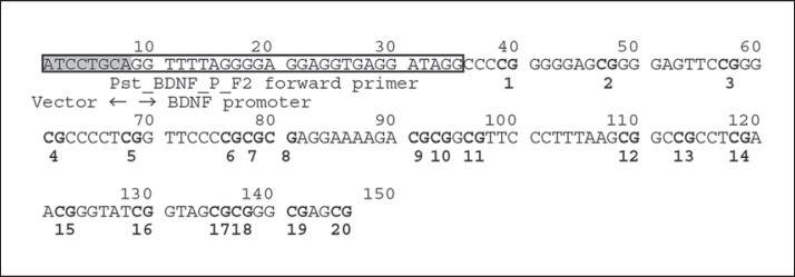 BDNF promoter region examined in the DNA methylation analysis. The target region used for the DNA methylation analysis contains 20 CpG sites, shown in bold type. The vector region has been shaded. The Pst_BDNF_P_F2 forward primer is shown in the box. The targeted regions, consisting of about 120 bp, were positioned from the terminal point of the forward primer (GenBank: AF411339; at position 53144) for direct nucleotide sequencing.