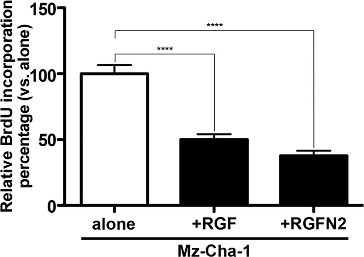Co-culture of Mz-Cha-1 cholangiocytes with immortalized rat portal fibroblastic RGF and RGF-N2 cell lines by bromodeoxyuridine incorporation assay. Sub-confluent immortalized human Mz-Cha-1 cholangiocytes were labeled with bromodeoxyuridine reagent for 24 hours (day 1), and co-cultured with RGF and RGF-N2 cells for additional 24 hours (day 2), before assessment of bromodeoxyuridine incorporation. Both RGF ( **** + RGF : M = 50 . 11 , SE = 3 . 899 , vs . alone : M = 100 , SE = 22 . 76 , p˂ . 0001 , n = 4) and RGF-N2 ( ****+RGF-N2 : M = 37 . 64 , SE = 13 . 40 vs . alone : M = 100 , SE = 22 . 76 , p˂ . 0001 , n = 4) cell lines are able to inhibit proliferation of cholangiocytes.