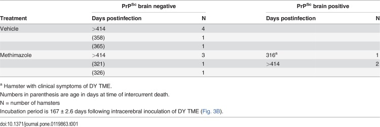Western blot of prion protein in brain of hamsters following intranasal inoculation of DY TME agent in the absence and presence of a preexisting lesion to the olfactory epithelium. Brain from hamsters at sacrifice (see   Table 1 ) from vehicle (A) and methimazole (B) treatment groups followed by intranasal inoculation of DY TME were enriched for PrP Sc  by detergent extraction, differential ultracentrifugation, and proteinase K digestion. For each sample 20 mg tissue equivalents was examined by Western blot for PrP Sc , except for two samples in which only 2 mg tissue equivalents was used (B, lanes 1 and 5). None of the hamsters in the vehicle group and only one hamster in the methimazole group exhibited symptoms of DY TME (B, lane 5 and   Table 1 ). The hamster exhibiting clinical symptoms had a strong PrP Sc  signal in brain, and two additional hamsters in the methimazole group that were clinically normal and sacrificed after 414 days postinoculation also had evidence of PrP Sc  in brain (B, lanes 1 and 7). Molecular weight markers at edge of western blots correspond to 20, 30, and 40 kilodaltons.