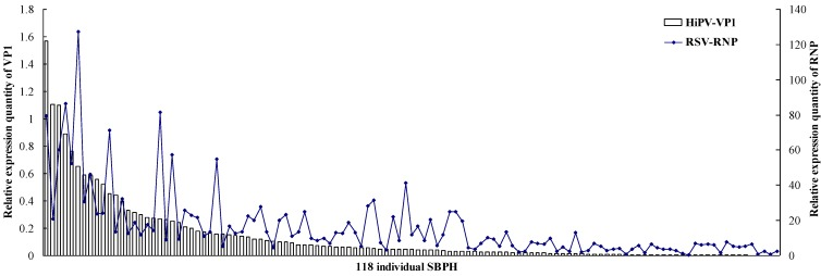 Titers of HiPV and RSV in single SBPH. After qRT-PCR, the levels of HiPV VP1 and RSV RNP transcripts in single SBPH were normalized relative to the β -actin transcript according to the ΔC T algorithm. The 118 individual SBPHs are arranged according to descending VP1 expression quantity as the abscissa; the left ordinate indicates the expression levels of VP1 , and the right ordinate indicates the expression levels of RNP .