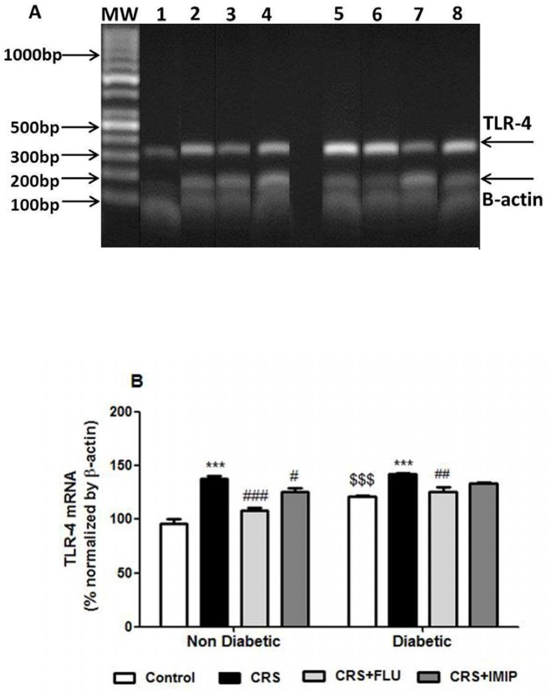 (A) Ethidium bromide-stained agarose gel electrophoresis showing the amplified RT-PCR products of TLR-4 (299bp) and β-actin (180 bp) as an internal standard, from aortic homogenates of Wistar rats. First Lane (MW): molecular weight ladder standard. Lane 1: control non-diabetic group. Lane 2: Non-diabetic/CRS vehicle-treated group. Lane 3: Non-diabetic/CRS fluoxetine-treated group. Lane 4: Non-diabetic/CRS imipramine-treated group. Lane 5: Control diabetic group. Lane 6: Diabetic/CRS vehicle-treated group. Lane 7: Diabetic/CRS fluoxetine-treated group. Lane 8: Diabetic/CRS imipramine-treated group. (B) Effects of fluoxetine (FLU) versus imipramine (IMIP) on aortic TLR-4 gene expression (mRNA) as % normalized by β-actin quantity using semi-quantitative RT-PCR in diabetic and non-diabetic rats exposed to chronic restraint stress (CRS). Data are mean±SEM (n = 6). ***P