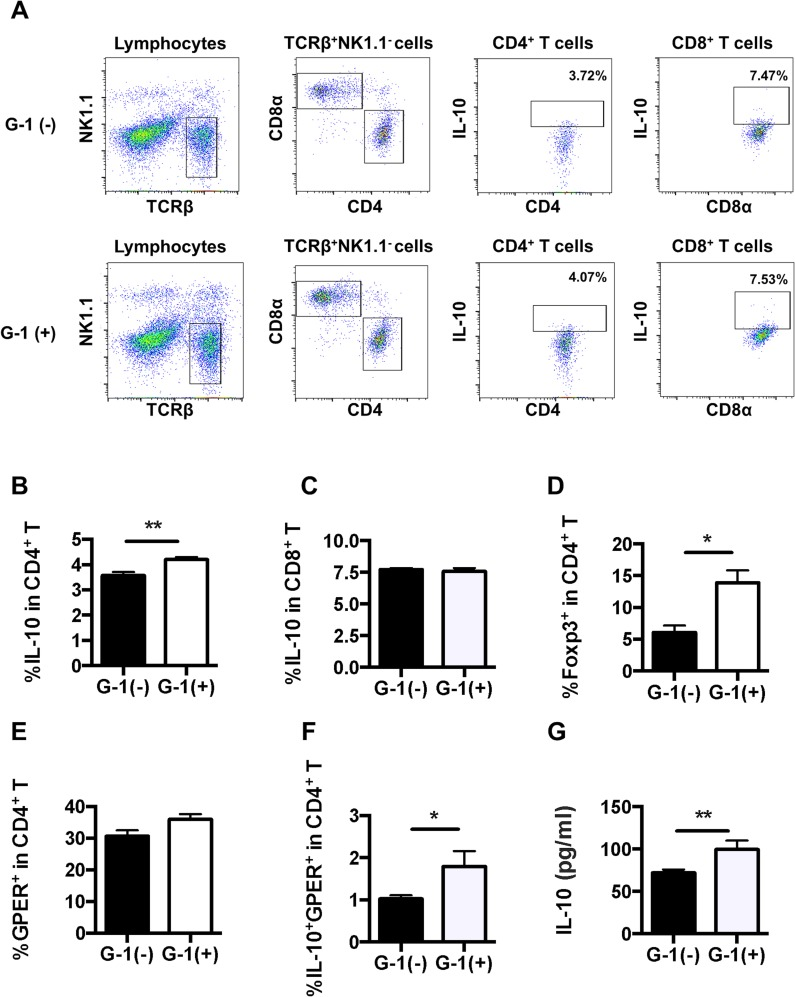 G-1 treatment increased the frequency of IL-10 + CD4 + T cells and the secretion of IL-10 from splenocytes in C57BL/6 mice. A : Representative FACS data showing frequencies of IL-10 + CD4 + T cells and IL-10 + CD8 + T cells in splenocytes. B , C : Splenocytes were analyzed using a flow cytometer for the frequency of IL-10-producing CD4 + and CD8 + T cells. D : Splenocytes were analyzed using a flow cytometer for the frequency of Foxp3 + CD4 + T cells. E , F : Splenocytes were analyzed using a flow cytometer for the frequency of GPER-expressing cells and IL-10-producing GPER + CD4 + T cells. G : The levels of IL-10 in splenocyte culture supernatant were measured by means of ELISA. Values are expressed as the mean ± SEM. * P