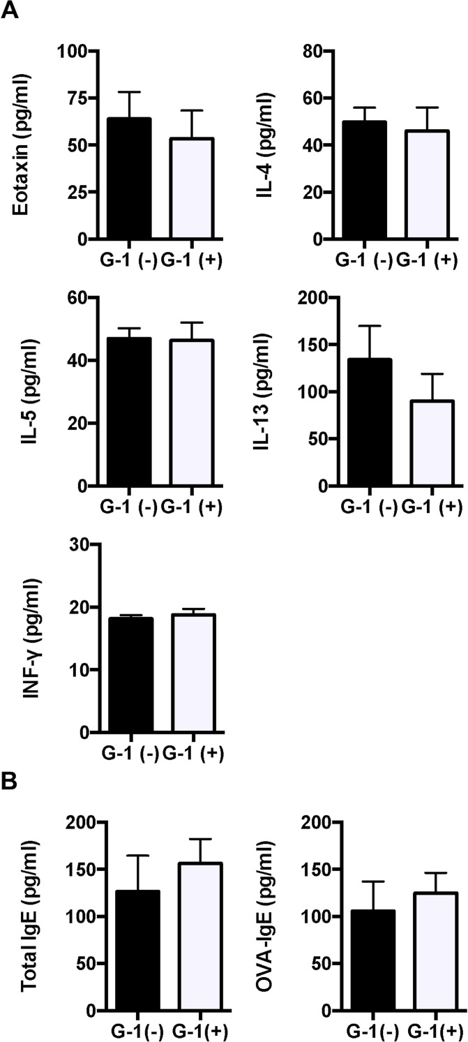 IL-10 depletion eradicated G-1-induced reduction of Th2 cytokines in BAL fluid and serum IgE. A , B : The levels of eotaxin, IL-4, IL-5, IL-10, IL-13, and IFN-γ in BAL fluid and total and OVA-specific IgE antibodies in serum of IL-10 KO mice were measured using ELISA. Values are expressed as the mean ± SEM for G-1-treated mice (n = 6) and non-treated controls (n = 7).