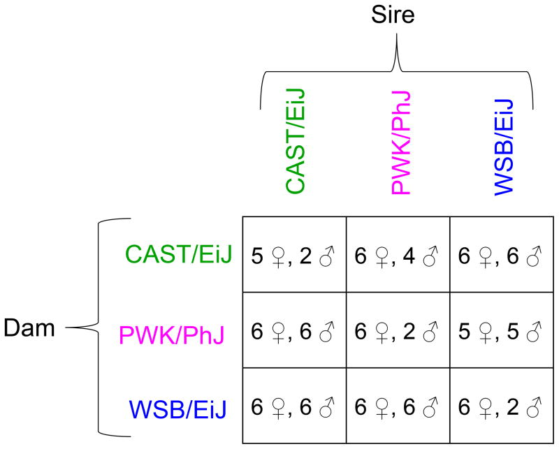 Diallel crossing scheme and sample sizes. We selected three divergent inbred strains representative of three subspecies within the Mus musculus species group. We generated offspring from all possible pairwise crosses to form a 3×3 diallel, including age- and sex-matched biological replicates for each of the nine possible genotypic combinations. Mice were aged to 23 days, sacrificed, and total RNA extracted from whole brain, liver, kidney, and lung. Sample size shown is for RNAseq (52 female, 39 male). RNAseq was performed on RNA extracted from brain and microarrays were run on RNA extracted from brain, liver, kidney, and lung.