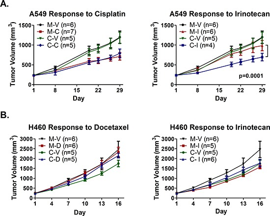 Epigenetic therapy augments response of A549 xenografts, but abrogrates response of H460 xenografts, to irinotecan, and does not sensitize to cisplatin or docetaxel Subcutaneous hind flank tumors were established in NOD/SCID mice from A549 or H460 cells treated in vitro with mock (M) or the combination of Aza and entinostat (C). (A) Mice bearing pretreated A549 tumors were treated with 2 mg/kg cisplatin (M-C and C-C) on day 2, 10 mg/kg irinotecan (M-I and C-I) on days 2 5, or saline vehicle (M-V and C-V), for three one-week cycles. Curves represent mean tumor volume +/− SEM. Statistical significance determined using a mixed effects model and REML. (B) Mice bearing pretreated H460 tumors were treated with 2.5 mg/kg docetaxel q4d × 2 escalated to 5 mg/kg docetaxel q4d × 2 (M-D and C-D), 10 mg/kg irinotecan q4d × 4 (M-I and C-I), or saline vehicle (M-V and C-V). Curves represent mean tumor volume +/− SEM.