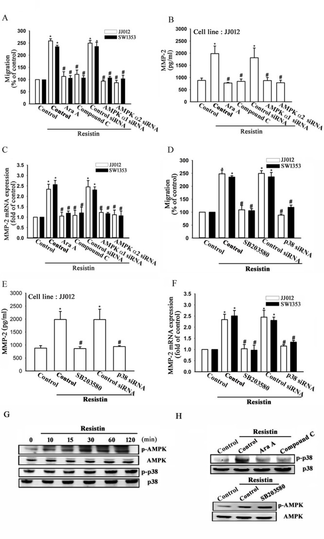 AMP-activated protein kinase <t>(AMPK)</t> is involved in resistin-induced matrix metalloproteinase (MMP-2) expression and cell migration JJ012 and SW1353 cells were pre-treated with Ara A (0.5 mM) and compound C (10 μM) for 30 min or pre-transfected with control, AMPKα1, or AMPKα2 siRNA for 24 h, and subsequently stimulated with resistin (3 ng/ml) for 24 h. In vitro migration, MMP-2 protein expression (JJ012 cells), and MMP-2 mRNA expression were measured by (A) Transwell assays, (B) enzyme-linked immunosorbent assay (ELISA), and (C) real-time quantitative polymerase chain reaction (RT-qPCR), respectively. Next, the JJ012 and SW1353 cells were pre-treated with SB203580 (10 μM) for 30 min or pre-transfected with control or <t>p38</t> siRNA for 24 h, and subsequently stimulated with resistin (3 ng/ml) for 24 h. In vitro migration, MMP-2 protein expression (JJ012 cells), and MMP-2 mRNA expression were measured by (D) Transwell assays, (E) ELISA, and (F) RT-qPCR, respectively. (G) The JJ012 cells were incubated with resistin for the indicated time intervals, and the p-AMPK and p38 expression were examined by western blot. (H) The JJ012 cells were pre-treated for 30 min with Ara A and compound C, or SB203580 followed by stimulation with resistin. The p-p38 and p-AMPK expression were measured by western blot. The results are expressed as mean ± SEM. *, P