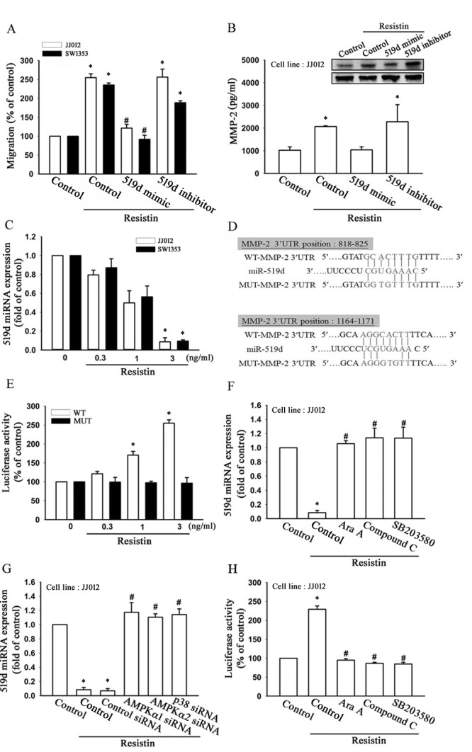 Resistin promotes cell migration and matrix metalloproteinase (MMP-2) expression by down-regulating microRNA (miR)-519d expression (A) The JJ012 and SW1353 cells were transfected with miR-519d mimic or inhibitor for 24 h, and cell migration ability was examined by Transwell assay. (B) The JJ012 cells were transfected with an miR-519d mimic or inhibitor for 24 h, and MMP-2 expression was examined by western blot (upper panel), and enzyme-linked immunosorbent assay (lower panel). (C) The JJ012 and SW1353 cells were incubated with resistin (0.3–3 ng/ml) for 24 h, and miR-519d expression was detected by real-time quantitative polymerase chain reaction. (D) Sequences of miR-519d and the potential miR-519d binding site at the MMP-2 3′ untranslated region (3′ UTR; WT-MMP-2 3′ UTR). Also shown are the nucleotides mutated in the MMP-2 3′UTR mutant (MUT-MMP2 3′ UTR). (E) The JJ012 and SW1353 cells were transfected with a wild-type or mutant MMP-2 3′ UTR luciferase plasmid for 24 h followed by stimulation with resistin (0.3-3 ng/ml) for 24 h, and the relative luciferase activity was measured. The JJ012 cells were pre-treated with AMPK and p38 inhibitors for 30 min or pre-transfected with specific siRNAs for 24 h followed by stimulation with resistin (3 ng/ml) for 24 h; and the (F, G) miR-519d expression and (H) MMP-2 3′ UTR activity were examined. The results are expressed as mean ± SEM. *, P