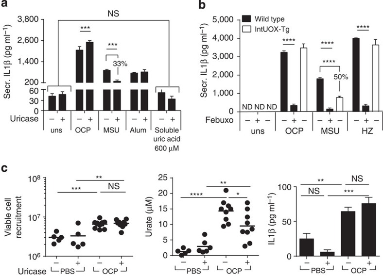 Urate generated by XOR is not the mediator of inflammasome responses in crystal-stimulated macrophages. ( a , b ) In vitro C57BL/6 or intUOX-Tg-derived BMDM (Pam3Cys primed), pretreated with uricase—10 μg ml −1 and XOR inhibitor febuxostat—200 μM, were stimulated with OCP or MSU at 250 μg ml −1 , Alum-500 μg ml −1 , HZ-200 μg ml −1 or soluble urate at 600 μM. Experiments were performed at 6 h; data are representative of at least two experiments. ( c ) Mice were pretreated with uricase—20 μg per mouse. OCP or PBS injected. After 6 h, peritoneal washes were obtained, viable cells counted, and urate and IL1β measured in cell-free washes (two pooled experiments). Results are expressed as mean±s.e.m. Significance was determined at * P ≤0.05, ** P ≤0.01, *** P ≤0.005 and **** P ≤0.0001 by analysis of variance. ND, not detectable; NS, not significant.