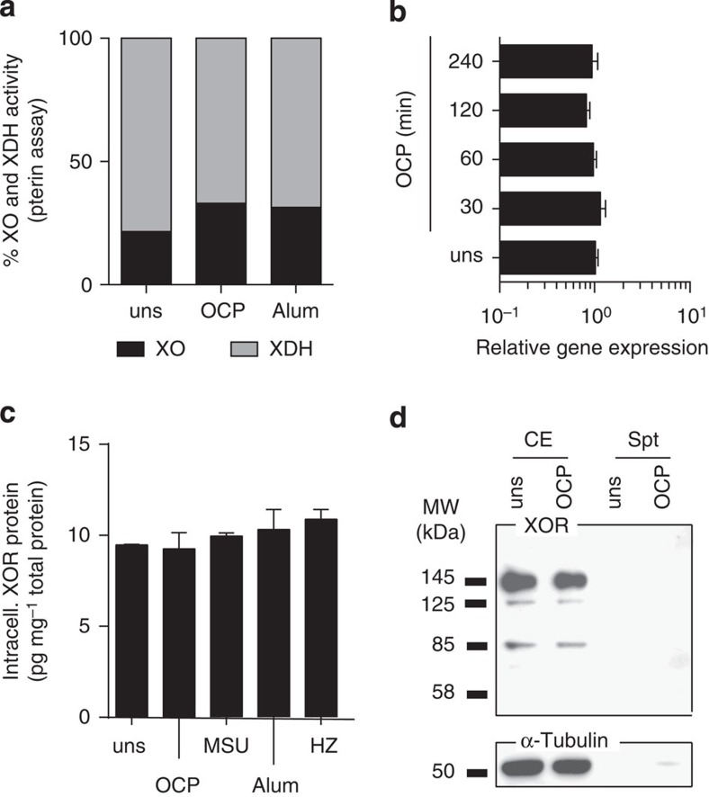 XOR was not modulated at RNA and protein levels. In vitro C57BL/6 BMDM (Pam3Cys (P3C) or LPSup primed), and THP1 (PMA primed) were stimulated with OCP and MSU at 250 μg ml −1 , 500 μg ml −1 Alum and 200 μg ml −1 HZ. ( a ) The % XO and XDH activity was measured in BMDM cell lysates using the pterin assay; ( b ) RNA transcript level of XOR by qRT–PCR in P3C-primed BMDM. Expression levels were quantified using the 2 ΔΔCT method, with Tbp as a reference gene. ( c ) Total XOR protein levels in P3C-primed BMDM measured by ELISA. ( d ) THP1 cells stimulated with OCP crystals and the CE, and supernatants blotted against anti-human XOR antibody or α-tubulin.