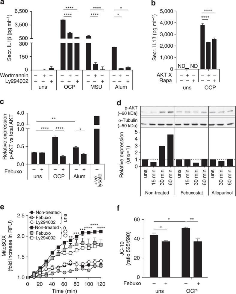 Crystal-mediated XOR activation induces the PI3K–AKT–mTOR pathway and mitochondrial ROS production. In vitro BMDM (Pam3Cys primed), and THP1 cells (PMA primed) were pretreated with 200 μM febuxostat, 10 μM Ly294002, 10 μM Wortmannin, 10 μM AKTx, or Rapamycin (Rapa), and stimulated with OCP or MSU at 250 μg ml −1 , or 500 μg ml −1 Alum. ( a , b ) IL1β protein secretion measured in BMDM. ( c ) Relative expression levels determined by ELISA of phosphorylated (p-) AKT (ser473) over total AKT levels in BMDM at 1 h. ( d ) THP1 cell extracts analysed for phosphorylated AKT (p-AKT) at ser473, and α-tubulin by western blot. Relative protein levels determined by band intensity quantification, and given as p-AKT over α-tubulin, normalized with unstimulated cells being 1. ( e ) Mitochondrial ROS detected by MitoSOX, results given as RFU at T =60 min over T =0. ( f ) Mitochondrial potential of BMDM was measured using the ratio of monomeric (Em 525 ) to multimeric JC-10 (Em 590 ). Experiments were performed at 6 h; data are representative of at least two experiments. Results are expressed as mean±s.e.m. Significance was determined at * P ≤0.05, ** P ≤0.01, *** P ≤0.005 and **** P ≤0.0001 by analysis of variance for all panels