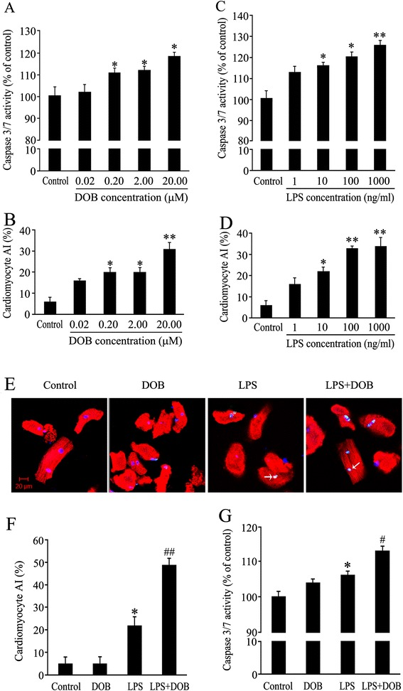 Caspase 3/7 activity and apoptotic index of cardiomyocytes treated with dobutamine (DOB) and lipopolysaccharide (LPS). (A,B) Adult mouse ventricular myocytes treated with DOB at various doses for 24 hours. (C,D) Adult mouse ventricular myocytes exposed to LPS at various concentrations for 24 hours. (E) Representative confocal images of TUNEL assay (green) of adult mouse ventricular myocytes treated with 0.02 μM DOB or/and 10 ng/ml LPS for 24 hours; all cardiomyocytes were stained with anti-cardiac troponin I (cTnI) antibody (red) and total nuclei with 4', 6-diamidino-2-phenylindole (DAPI, blue). White arrowheads indicate apoptotic cardiomyocytes (scale bar = 20 μm). (F,G) AI and caspase-3/7 activity in cardiomyocytes treated with 0.02 μM DOB or/and 10 ng/mL LPS for 24 hours. Mean ± standard error of the mean (n = 4 to 6). * P