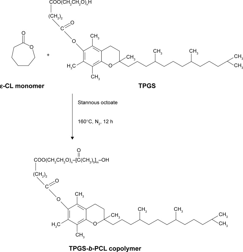 Schematic description of the synthesis of TPGS- b -PCL diblock copolymer. Abbreviations: ε-CL, ε-caprolactone; h, hours; PCL, poly(ε-caprolactone); TPGS, d -α-tocopheryl polyethylene glycol 1000 succinate.