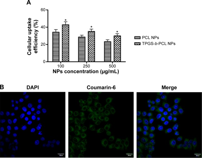 Cellular uptake of coumarin-6-loaded PCL NPs and TPGS- b -PCL NPs after incubated with HeLa cells. Notes: ( A ) Uptake efficiency of coumarin-6-loaded PCL NPs and TPGS- b -PCL NPs by HeLa cells (* P
