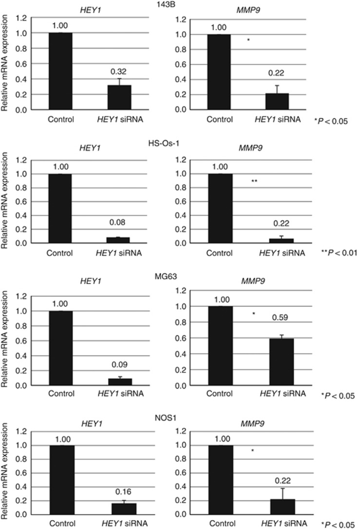 Knockdown of HEY1 decreased the expression of <t>MMP9</t> in human osteosarcoma cells. MMP9 expression levels in 143B, HS-Os-1, MG63 and NOS1 cells were assessed by using real-time PCR 24 h after transfection with control siRNA or HEY1 siRNA. The experiment was performed in triplicate with similar results. * P