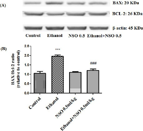 Effect of NSO (0.5 ml/kg) and ethanol on the protein levels of Bax and Bcl2 in the rat liver tissue. (A) Representative Western blots showing specific bands for Bax, Bcl2 and β-actin as an internal control. Equal amounts of protein sample (50 μg) obtained from whole liver homogenate were applied in each lane. (B) Densitometric data of protein analysis. Data are expressed as the mean ± SEM. *** P