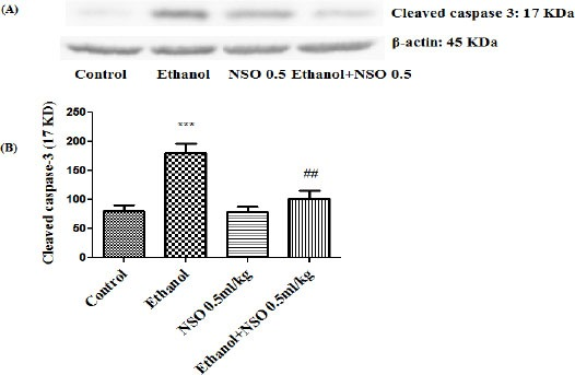 Effect of NSO (0.5 ml/kg) and ethanol on the protein level of caspase-3 (cleaved caspase-3) in the rat liver tissue. (A) Representative Western blots showing specific bands for cleaved caspase-3 (17 KDa) and β-actin as an internal control. Equal amounts of protein sample (50 μg) obtained from whole liver homogenate were applied in each lane. (B) Densitometric data of protein analysis. Data are expressed as the mean ± SEM. *** P