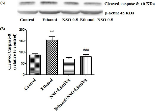 Effect of NSO (0.5 ml/kg) and ethanol on the protein level of caspase 8 (cleaved caspase 8) in the rat liver tissue. (A) Representative Western blots showing specific bands for cleaved caspase 8 (10 KDa) and β-actin as an internal control. Equal amounts of protein sample (50 μg) obtained from whole liver homogenate were applied in each lane. (B) Densitometric data of protein analysis. Data are expressed as the mean ± SEM. *** P