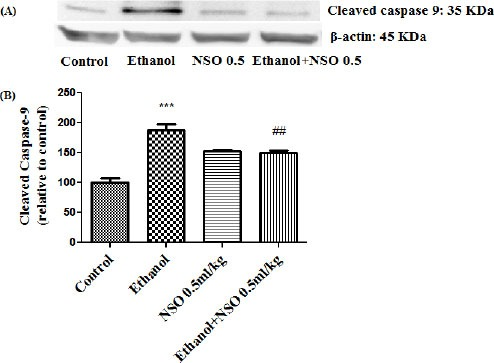 Effect of NSO (0.5 ml/kg) and ethanol on the protein level of caspase-9 (cleaved caspase-9) in the rat liver tissue. (A) Representative Western blots showing specific bands for cleaved caspase-9 (35 KDa) and <t>β-actin</t> as an internal control. Equal amounts of protein sample (50 μg) obtained from whole liver homogenate were applied in each lane. (B) Densitometric data of protein analysis. Data are expressed as the mean ± SEM. *** P