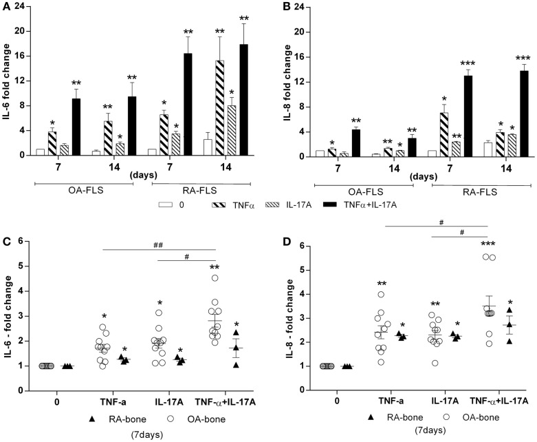 Effects of TNF-α and IL-17A on IL-6 and IL-8 production . (A) OA and (B) RA FLS were cultured in osteogenic medium for 14 days and bone samples (C,D) for 7 days, in the presence or absence of TNF-α 1 ng/ml and/or IL-17A 50 ng/ml. IL-6 (C) and IL-8 (D) concentrations in supernatants were quantified by ELISA. Results were analyzed using the Wilcoxon test. * p