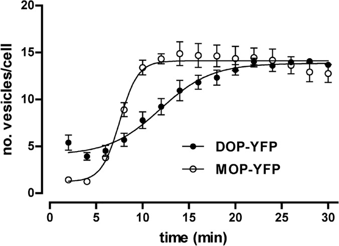 Time course of the generation of endocytic vesicles containing either DOP-YFP or MOP-YFP receptors transiently expressed in Flp-In T-REx HEK293 cells upon agonist treatment. Time-course curves showing the generation of endocytic vesicles obtained from images of cells expressing DOP-YFP or MOP-YFP receptors upon treatment with DTLET (10 μM) and DAMGO (10 μM) respectively.