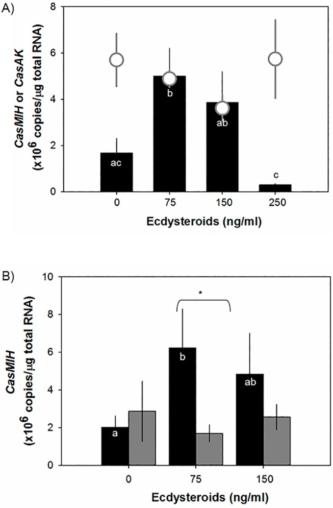 Transcriptional levels of CasMIH in eyestalk ganglia after incubation with different concentrations (A) and ratios (B) of active ecdysteroids by qRT-PCR assay. A) CasMIH levels (black bar, n = 5–8) in eyestalk ganglia that were incubated with different ecdysteroid concentrations composed of a 3:1 ratio (w:w) of PoA: 20-HE. The ecdysteroid concentrations of 75, 150, and 250 ng/ml mimic the D o , D 1 , and D 2 stages, respectively. C . sapidus arginine kinase ( CasAK ) expression (open gray circle, n = 6–8) was quantified in the same cDNA samples. B) CasMIH levels in eyestalk ganglia incubated with different ratios (w:w) of PoA and 20-HE: 3:1 (black bar, n = 3–9) and 1 to 3 (gray bar, n = 3–9). Each cDNA sample containing 25 ng total RNA equivalent was assayed in duplicate. The expression levels are represented as copies/μg total RNA. The data are presented as mean ± SE. All data were subjected to a normality test using the Shapiro-Wilk test (SigmaPlot). Statistical significance was accepted at P