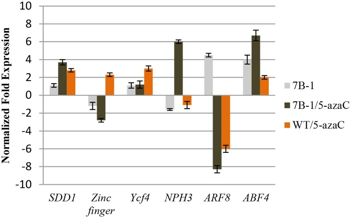 QRT-PCR validation of the differentially regulated genes in response to 5-azaC treatment. Expression changes are presented as normalized fold changes between the test tissues and reference tissue (untreated WT). Positive and negative values indicate up and down regulations of the gene expression, respectively. Twofold threshold was considered as a cutoff value for significant changes in the expression. Error bars represent standard errors of three technical replicates based on DMNRT (p = 0.05).