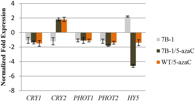 QRT-PCR validation of CRY1 , CRY2 , PHOT1 , PHOT2 , and HY5 genes in 7B-1 and WT seedlings in response to 5-azaC. Expression changes are presented as normalized fold changes between the test tissues and reference tissue (untreated WT). Positive and negative values indicate up and down regulations of the gene expression, respectively. Twofold threshold was considered as a cutoff value for significant changes in the expression. Error bars represent standard errors of three technical replicates based on DMNRT (p = 0.05).