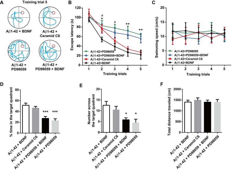 Effect of intra-hippocampal injections of BDNF, ERK activator ceramide C6 and the ERK inhibitor PD98059 on spatial learning function in the rat model of Alzheimer's disease. (A) Representative swim traces of each group in the fifth training trial. (B) Escape latency and (C) swimming speed in each training trial were also analyzed. (D) The time spent in the target quadrant in the probe task. (E) The number of times crossing the platform in the probe task. (F) The total distance traveled in the open field test after the probe task. n = 8 each group. For panel B, * P