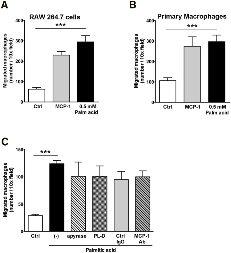 Attraction of monocytes and macrophages to supernatants of mature adipocytes exposed to palmitic acid. Migration of (A) RAW264.7 cells or (B) primary mouse macrophages through a transwell (8 μm pore size) to supernatants from untreated (control) or treated differentiated mature adipocytes with 0.5mM palmitic acid. MCP-1 (50 ng/ml) was used as positive control. (C) Adipocytes were treated with 0.5 mM palmitic acid in the absence or presence of 0.025 U/ml apyrase, 0.5 U/ml phospholipase-D or 50 μg/ml control IgG or MCP-1 neutralizing antibody. Macrophages that migrated to the lower chamber were stained with DAPI and the number of cells was counted under fluorescence microscopy. Values represent as mean ± S.D. of representative experiment. * P