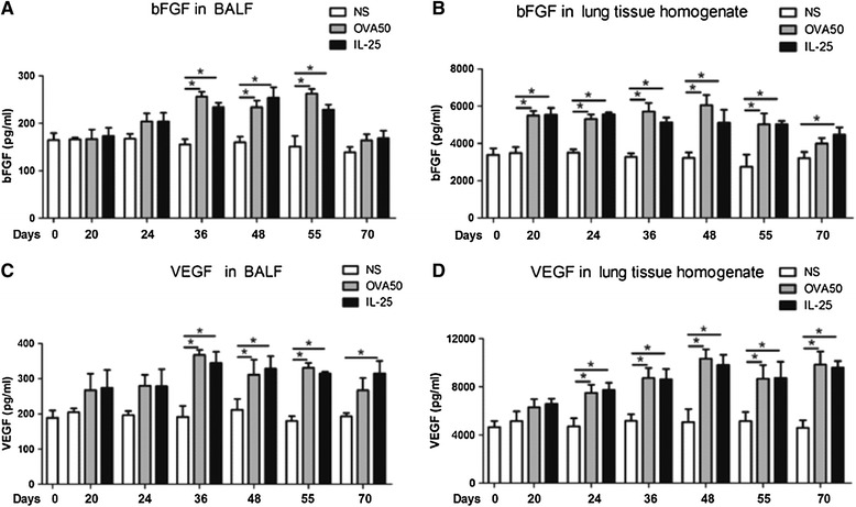 IL-25 potentiated airways VEGF and bFGF expression. Concentrations of basic fibroblast growth factor (bFGF, A and B ) and vascular endothelial growth factor (VEGF, C and D ) in bronchoalveolar lavage fluid (BALF) and lung tissue homogenates from saline (NS)-, OVA- and IL-25-challenged mice at various time points as indicated. The data were collected from 3 independent experiments and are expressed as the mean ± SEM (n = 5 in each group at each time point). *p