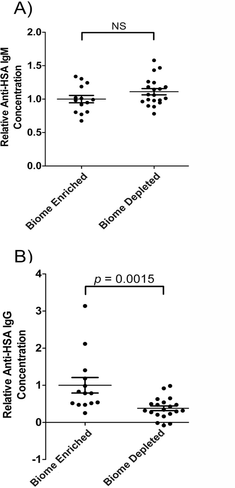 Natural anti-human serum albumin antibody levels in the serum of biome depleted (n = 20) and biome enriched (n = 15) rats. The relative concentration of antibody was determined by ELISA as described in the Methods. Relative levels of (A) IgM and (B) IgG are shown. Binding to human serum albumin (HSA) was used as a measure of reactivity toward a xenogeneic antigen for which the animals lacked previous exposure. The means, standard errors, and the p -values associated with comparing data from biome depleted and biome enriched animals using a t-test are shown. (NS = not significant)