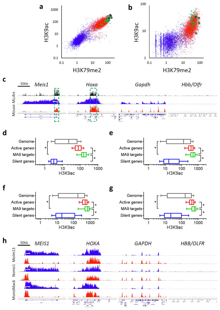 Unique H3K9 epigenomic signature at MLL-AF9 bound gene loci in MLL -fusion leukemia. ( a,b ) Scatterplots showing ChIP-seq signals for H3K79me2 (x-axis) and H3K9ac (y-axis) in mouse ( a ) MLL-AF9 leukemic cells, and ( b ) LSK cells sorted from normal mouse bone marrow. Hoxa cluster genes and Meis1 are highlighted in black circles. ( c,h ) Screen shots showing ChIP-seq profiles of MLL-AF9 fusion protein (black), H3K79me2 (blue) and H3K9ac (red) at select MLL-AF9 bound target ( HOXA cluster and MEIS1 ), active gene ( GAPDH ) and silent gene ( HBB/OLFR ) loci in ( c ) mouse and ( h ) human MLL-AF9 leukemic cell lines. The core occupied regions for MLL-AF9 fusion protein in mouse MLL-AF9 leukemia are highlighted ( c ; green-dashed box). ( d–g ) Boxplots showing ChIP-seq signal of H3K9ac in ( d ) mouse and ( e–g ) human MLL-AF9 leukemic cells including ( e ) Molm13, ( f ) Nomo1 and ( g ) MonoMac6 cells. ( a,b,d–g ) Data showing ChIP-seq signals of H3K79me2 or H3K9ac at TSS ± 2 kb regions of genome (gray; 18,240 genes), active genes (red; 4,560 genes), MLL-AF9 targets (green; 129 genes) and silent genes (blue; 4,560 genes). ( d–g ) Data represent mean ± s.d. * P