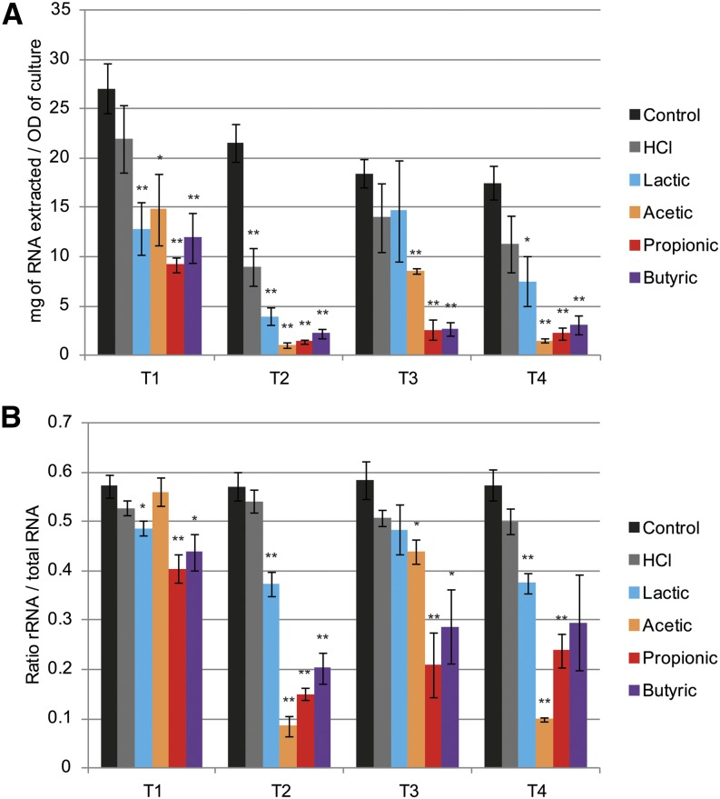 Weak organic acids reduce total RNA and ribosomal RNA in Candida albicans : Total RNA content and relative rRNA abundance in cell pellets used for RNA deep-sequencing experiment. (A) Total RNA extraction yield quantified by RiboGreen assay. (B) rRNA vs. total RNA ratio estimated by areas under the peaks found on Bioanalyzer electropherograms. n = 4; * P