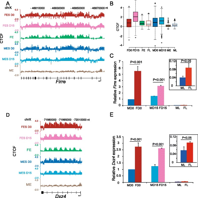 CTCF binding and expression change during male and female development. (A) CTCF occupancy at Firre in mouse female ES cells PGK12.1 before (FES D0) and after 15-day differentiation (FES D15) and in female 12.5 dpc embryos (FE) is compared to occupancy in male mouse ES cells WD44 before (MES D0) and after 15-day differentiation (MES D15) and in male 12.5 dpc embryos (ME). ChIP-chip data are shown as log 2 ChIP/input. (B) Box plots of CTCF occupancy (log 2 ChIP/input) at Firre in male (MD0, MD15) and female (FD0, FD15) ES cells, 12.5 dpc embryos (ME, FE), and adult livers (ML, FL). Same data as in (A) and Figure 1 B. (C) Firre expression level is significantly higher in female than in male ES cells (undifferentiated, D0, differentiated, D15) and liver (box insert). Note that expression is much higher in ES cells than in liver. Expression in male ES cells (D0) is set as 1. Average expression levels were measured by qRT-PCR of biological replicates and normalized to 18S RNA. P values were determined by one sample t-test. Error bars, s.e.m. (D, E) Same analysis as in (A, C) for Dxz4 .