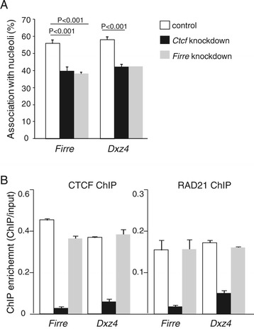 Knockdown of Firre or Ctcf decreases association of Firre and Dxz4 to the nucleolus. (A) Association frequency (in % of nuclei) between Firre or Dxz4 and the nucleolus as determined by DNA-FISH and immunostaining is significantly reduced after either Firre or Ctcf knockdown in Patski cells. At least 100 nuclei were scored in each experiment. P values were determined by two-tail unpaired student t-test. Error bars represent s.e.m. (B) Occupancy by CTCF and RAD21 at Firre and Dxz4 before and after knockdowns of Firre or Ctcf . ChIP enrichment is shown as the ratio between ChIP and input fractions as measured by qRT-PCR. Error bars represent s.e.m.