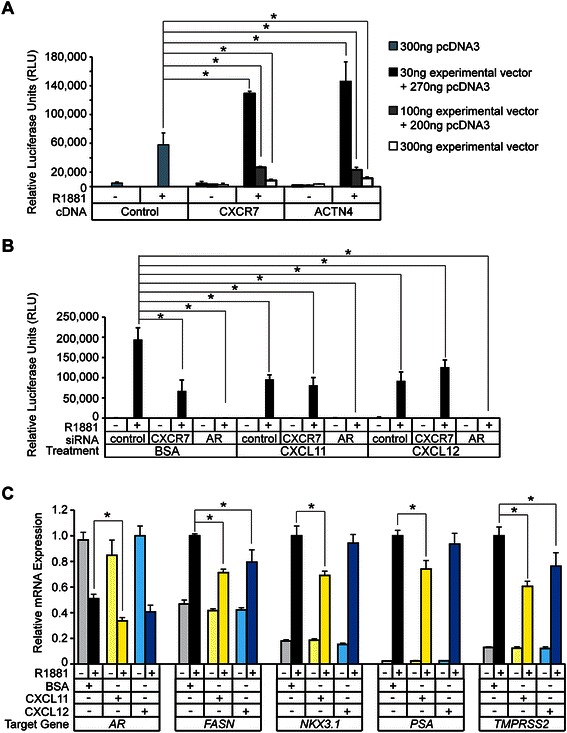 CXCR7 modulates AR transcriptional activity. (A) Luciferase assay testing the effects of CXCR7 overexpression on the AR-target promoter probasin in LNCaP cells. LNCaP cells were co-transfected with the pGL4.10-Luc2- probasin and pRLSV40 Renilla vectors along with increasing amounts (30 ng experimental + 270 ng pcDNA3, 100 ng experimental + 200 ng pcDNA3, 300 ng experimental + 0 ng pcDNA3) of CXCR7 or ACTN4 cDNA mammalian expression vectors. The maximal amount (300 ng) of the pcDNA3 mammalian expression vector served as the positive control. Cells were subsequently treated with androgen (1 nM R1881) or vehicle (ethanol) and tested for dual luciferase activity. Student's t -test was used to calculate significant differences (* p ≤ 0.05, n = 3) between control and experimental cells within the androgen-treatment group. (B) Luciferase assay testing the effects of CXCR7 siRNA knockdown and treatment with CXCR7 ligand on the AR-target promoter probasin . LNCaP cells were co-transfected with the pGL4.10-Luc2- probasin and pRLSV40- renilla vectors, along with control or experimental siRNAs (50 nM). Next, cells were pre-treated with indicated ligands (BSA, CXCL11, or CXCL12) for 30 min. Cells were then subsequently treated with androgen (1 nM R1881) or vehicle (ethanol) for 18 hrs and tested for dual luciferase activity. Student's t -test was used to calculate significant differences (* p ≤ 0.05, n = 3) between control cells and experimental cells within the androgen-treatment group. (C) RNA isolated from LNCaP cells treated with vehicle (0.1% BSA), CXCL11 (10 nM), or CXCL12 (10 nM) for 30 min and subsequently treated with vehicle or androgen (1 nM R1881) for 18 hrs were subjected to qPCR analysis for AR , FASN , NKX3.1 , PSA , and TMPRSS2 gene expressions. Student's t -test was used to calculate significant differences (* p ≤ 0.05, n = 3) between control and chemokine ligand-treated cells.