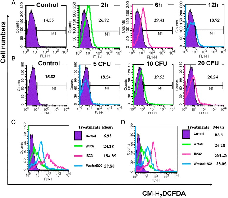 Impacts of BCG and/or Wnt/β-catenin signaling on ROS production in RAW264.7 cells. (A) RAW264.7 cells were infected with BCG at MOI of 10 for indicated time, then they were used for intracellular ROS measurement by a flow cytometry assay. A time-dependent ROS production was observed within 6 h. (B) RAW264.7 cells were infected with indicated doses of BCG for 6 h prior to be used for examination of intracellular ROS by a flow cytometry assay. A BCG dose-dependent ROS production was observed. (C) Impact of Wnt/β-catenin signaling on BCG-induced ROS production in RAW264.7 cells. RAW264.7 cells were infected with BCG at MOI of 10 for 6 h prior to be used for measuring intracellular ROS by a flow cytometry assay. An activation of Wnt/β-catenin signaling exhibited an ability to reduce BCG-induced ROS production. (D) Impact of Wnt/β-catenin signaling on oxidative stress in RAW264.7 cells. RAW264.7 cells were exposed to 500 μmol/L of H 2 O 2 for 6 h before they were harvested for intracellular ROS measurement. The addition of Wnt3a showed a capacity to scavenge oxidative stressed-ROS accumulation.