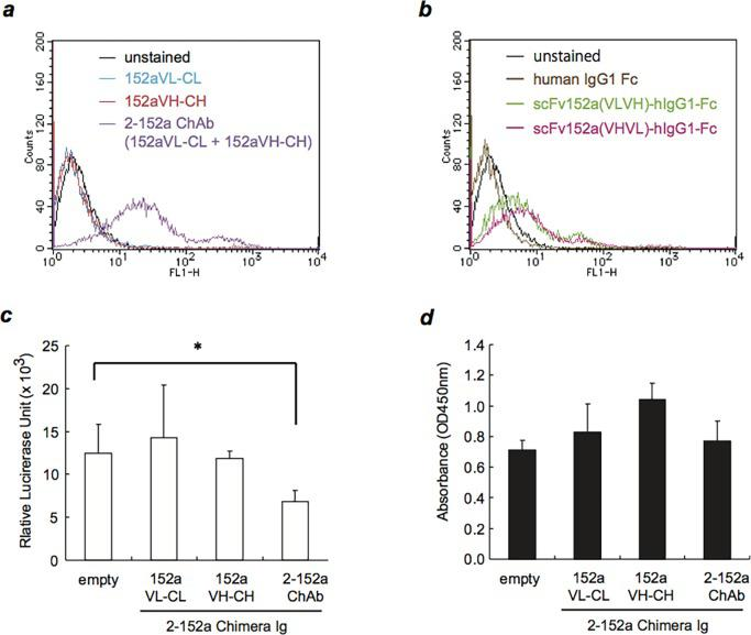 152a ChAb can bind to surface DHCR24 and shows anti-HCV activity. ( a ) HuH-7 (1 × 10 6 ) cells were incubated with the light or heavy chain of the chimeric Ig (152a Ch-L, 152a Ch-H) or 152a ChAb (1 μg/mL, respectively) at 4°C for 2 h, and then with an Alexa Fluor 488-conjugated goat anti-human IgG at 4°C for 1 h. The cells were then analyzed by flow cytometry. ( b ) HuH-7 (1 × 10 6 ) cells were incubated with 152a scFv-hIgG1-Fc at 4°C for 2 h, and then incubated with Alexa Fluor 488-conjugated goat anti-human IgG at 4°C for 1 h. The cells were then analyzed by flow cytometry. ( c ) Subgenomic HCV replicon FLR3-1 cells were plated in a 96-well plate at a density of 5 × 10 3 cells/well and allowed to adhere overnight. Then, the supernatant was removed, and the cells were treated with the light or heavy chain of the chimeric Ig (152a Ch-L, 152a Ch-H) or 152a ChAb (1 μg/mL, respectively) for 72 h. HCV replication was evaluated by measuring luciferase activity using the Bright-Glo Luciferase Assay System. *, p
